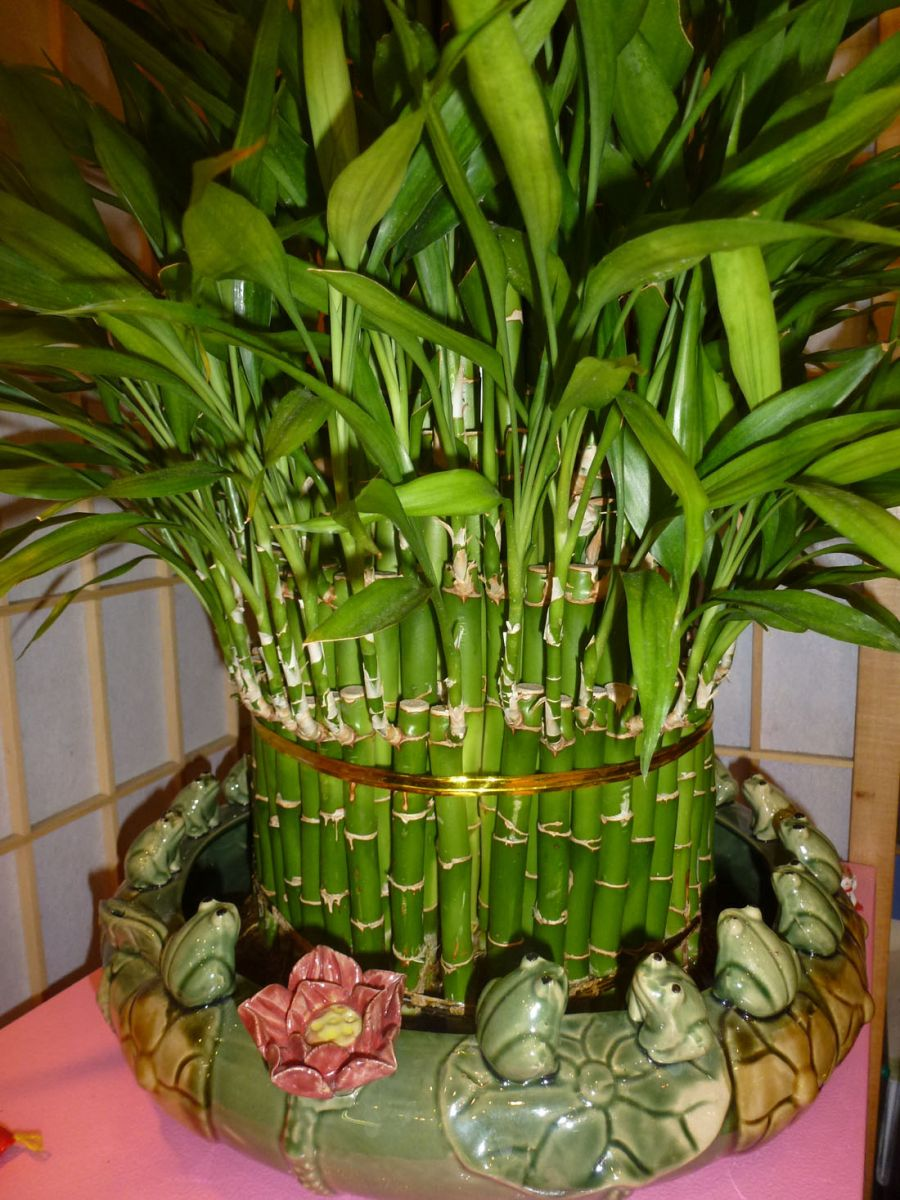 室內植物300種圖片名稱